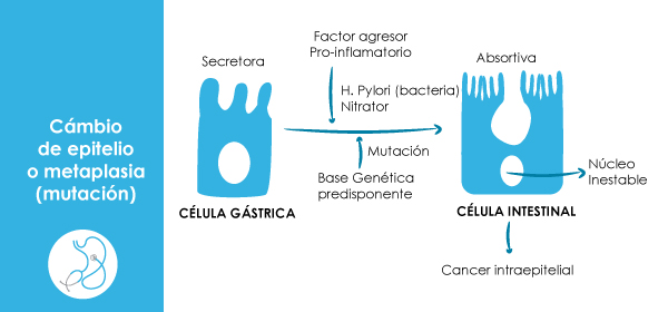 Gastritis cronica antral inactiva